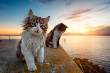 Fotorolgordijn Kat Two long-haired puppy cat at sunset on the lagoon.