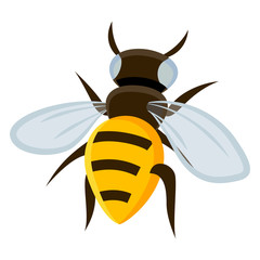 Wall Mural - Bee cartoon on white background - Vector
