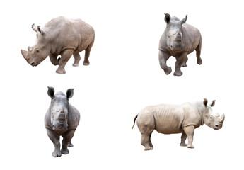 Photo sur cadre textile Rhino White rhino