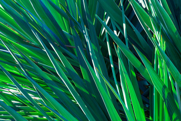 tropical leaf,  abstract green texture, nature background