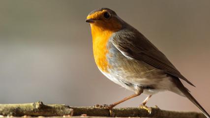 Oiseaux du Grésivaudan - Isère.