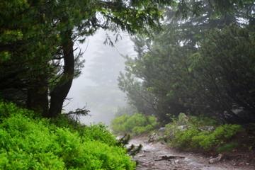 zamglony szlak w górach, las