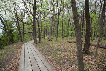 Wooden Walk Path in the Woods