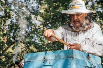 Russland, Beekeeper checking frame with honeybees