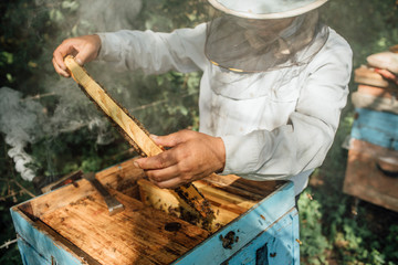 Russland, Beekeeper checking frame with honeybees, smoker and smoke