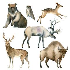 Watercolor realistic forest animal sketch. Brown bear, deer, elk, owl, bison, stag