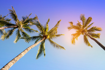 Tropical summer vacation banner background with coconut palm trees on blue sky - Image