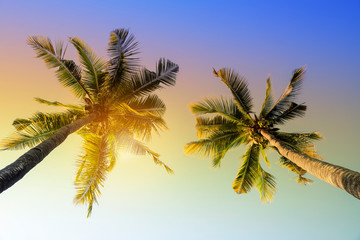 Coconut palm tree under blue sky. Vintage background. Travel card. Retro toned. - Image