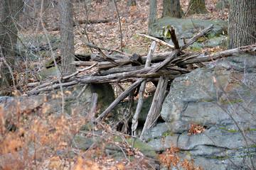 branches between stones
