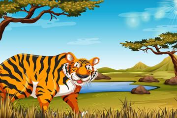 A tiger in nature scene