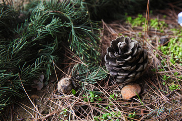 Branches and pine cone on the ground