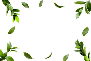 Spring background. Fresh green leaves frame on white background top view space for text Wall mural