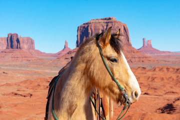 Acrylic Prints Coral Beautiful horse head portrait. Black mane. Green halter. Scenic desert and mountain landscape with mesas, buttes, and spires of American Southwest in Monument Valley under blue sky