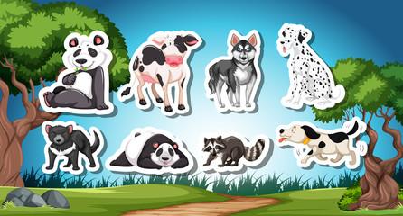 Set od black and white animal