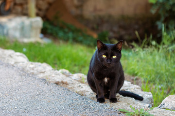 black cat on the streets of Pollenca