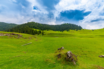 Beautiful pastoral scenery in the mountains in spring, with green foliage, fir tree forests and nice clouds