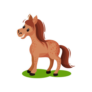 Brown spotted horse standing on green grass. Pony with flowing mane and long tail. Mammal animal. Flat vector icon