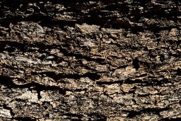 bark brown background