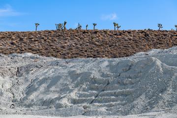 Joshua trees growing near a talc mine in the California desert, USA