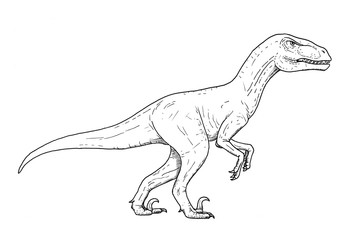 Drawing of dinosaur - hand sketch of velociraptor, black and white illustration