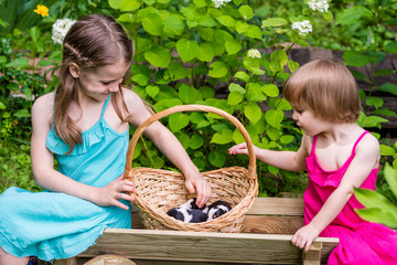 Two sisters  sit in wooden cart with basket with black and white Estonian hound puppies. Summertime in countryside.