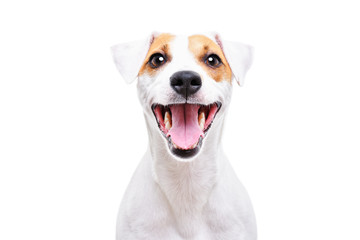Poster Chien Portrait of a funny dog Jack Russell Terrier, closeup, isolated on white background