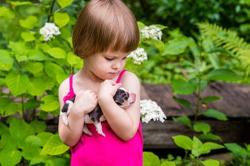 3-years-old girl looks intently to 4-days-old Estonian hound puppy which is firmly holding in her hands. Summertime in countryside.