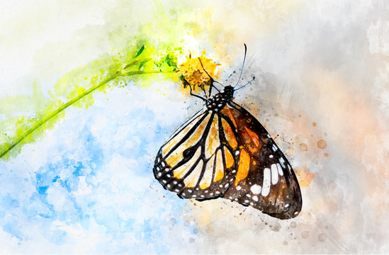 Watercolor art painting of colorful butterfly