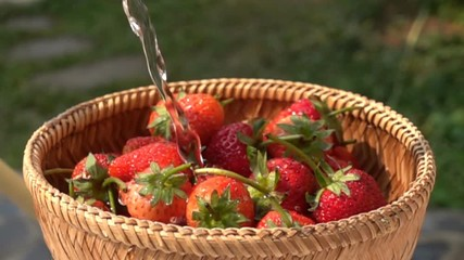 Fototapete - Pour water to a pile of fresh strawberries in a bamboo basket in Slow Motion