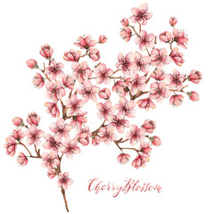 Cherry blossoms,watercolor illustration,spring flowers,card for you,branches, flowers,handmade