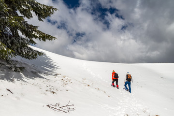 Two women hikers climbing towards the top of a snowy ridge in Bucegi mountains, Romania, passing by a green tree branch on their way up, during a Winter trekking adventure