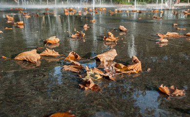 The autumn golden leaves on  Bosque Fountain at Battery Park in New York. USA