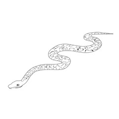 vector, isolated, snake sketch