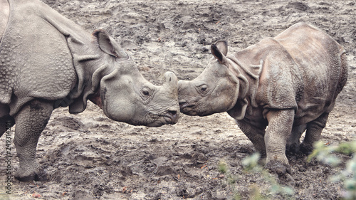 One Horned Rhinoceros  Amazing close up photo of an adult