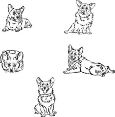 Dog, corgi, various poses, movements and foreshortenings of figures, black