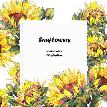 Greeting card with sunflowers. Watercolor illustration on white background.