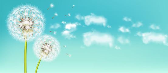 Obraz Spring dandelion flower Vector realistic. Sky background soft bokeh illustrations - fototapety do salonu