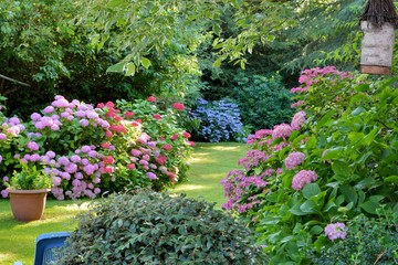 Spoed Fotobehang Hydrangea Beautiful garden with hydrangeas in Brittany