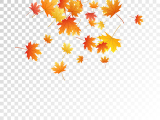 Maple leaves vector illustration, autumn foliage on transparent background. Wall mural