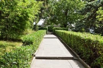 hedge of boxwood bushes in the park