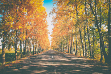 beautiful landscape of autumn road, on the edge of the road picturesque autumn forest with bright yellow foliage and blue sky, toned