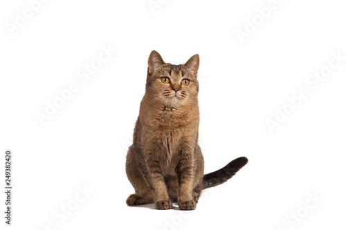 Funny Cute Cat Sitting On A White Background Stock Photo