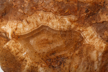 Macro mineral stone Agate Brown on white background