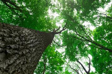 Fotobehang Bossen forest trees. nature green wood sunlight backgrounds