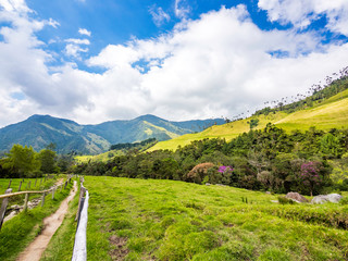 Beautiful day hiking scenery of Cocora Valley in Salento, Colombia