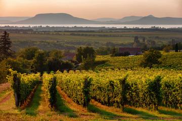Foto auf Leinwand Weinberg Vineyards and the Badacsony mountain with Lake Balaton at sunset in Hungary