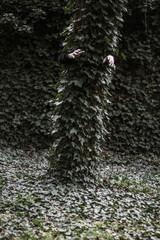 L'arbre qui appelle au secours