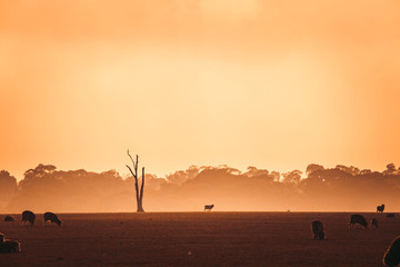 Tree in Field at Foggy Sunrise With Sheep in Foreground