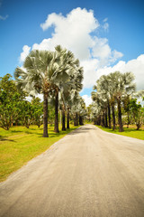 Palm trees roadside in the park garden with road on bright day and blue sky background