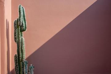 Foto op Plexiglas Cactus Pink wall